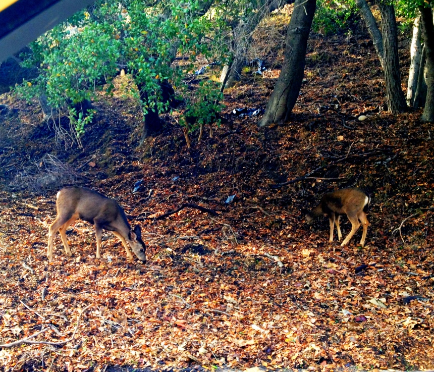 Bambi's!